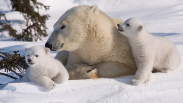 February 27 - International Polar Bear Day