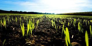 December 5 - World Soil Day