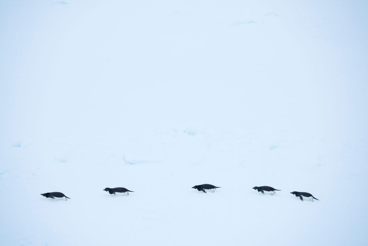 Antarctica is a harsh, unforgiving environment. PHOTOGRAPH BY MICHAEL MELFORD, NATIONAL GEOGRAPHIC CREATIVE